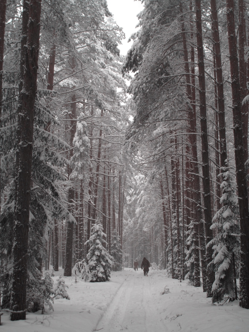 Valday Forest
